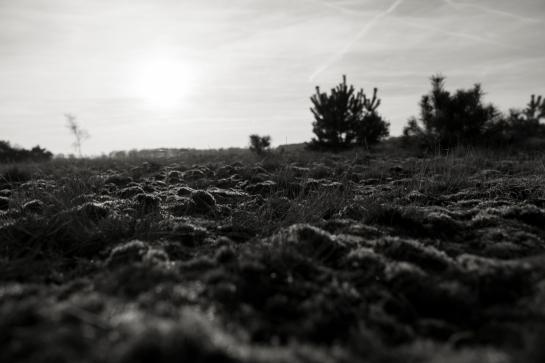 Moss and Sun