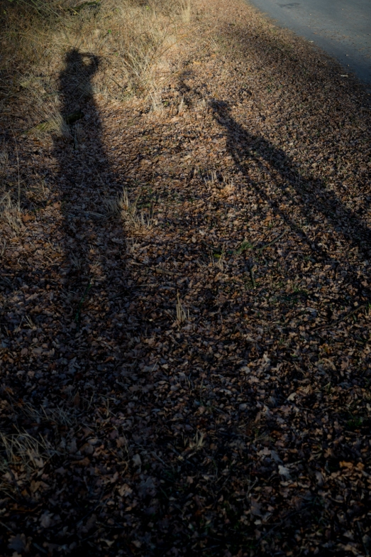 Me and my Bike in a Dutch Wood