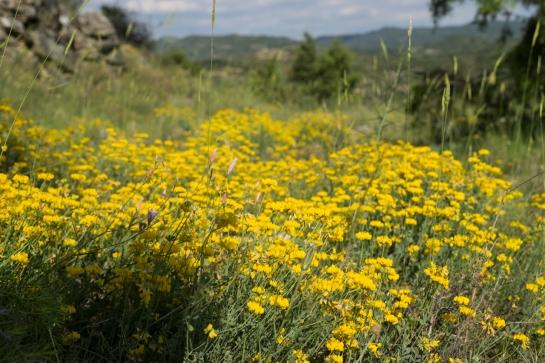The Yellow Field prt2