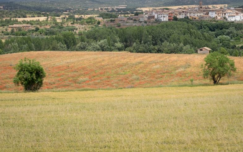 Fruitful Fields prt6