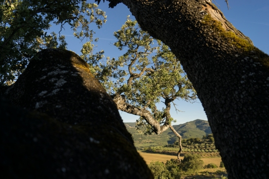 'Big Tree' 2016 prt6