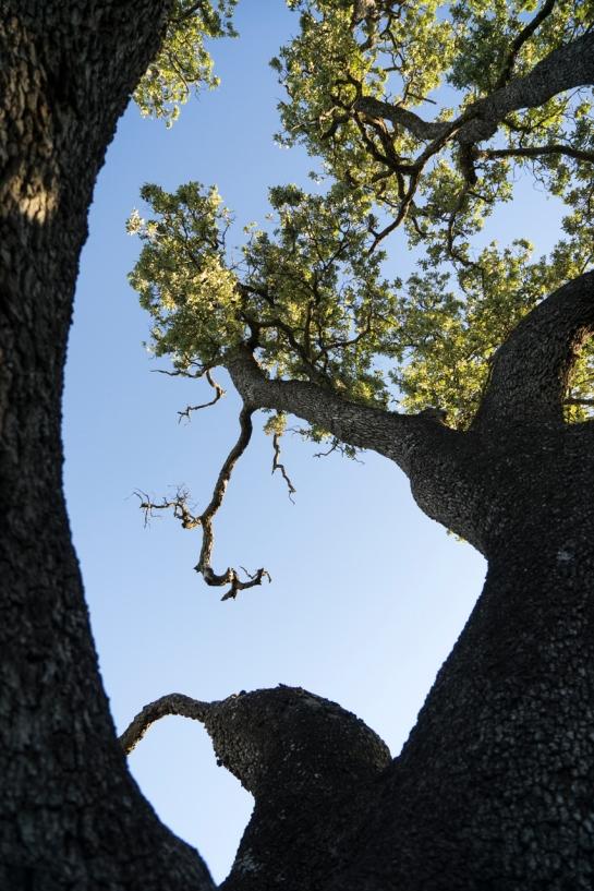 'Big Tree' 2016 prt8