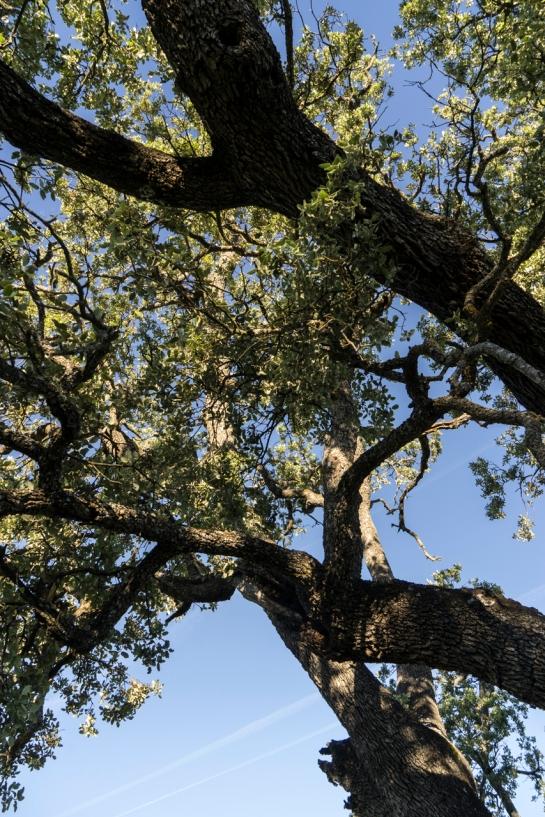 'Big Tree' 2016 prt10