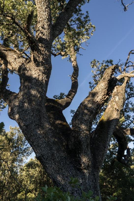 'Big Tree' 2016 prt11