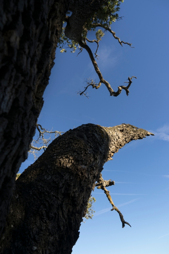 'Big Tree' 2016 prt12