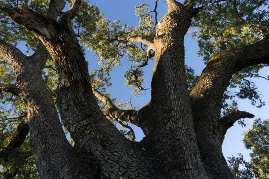 'Big Tree' 2016 prt13