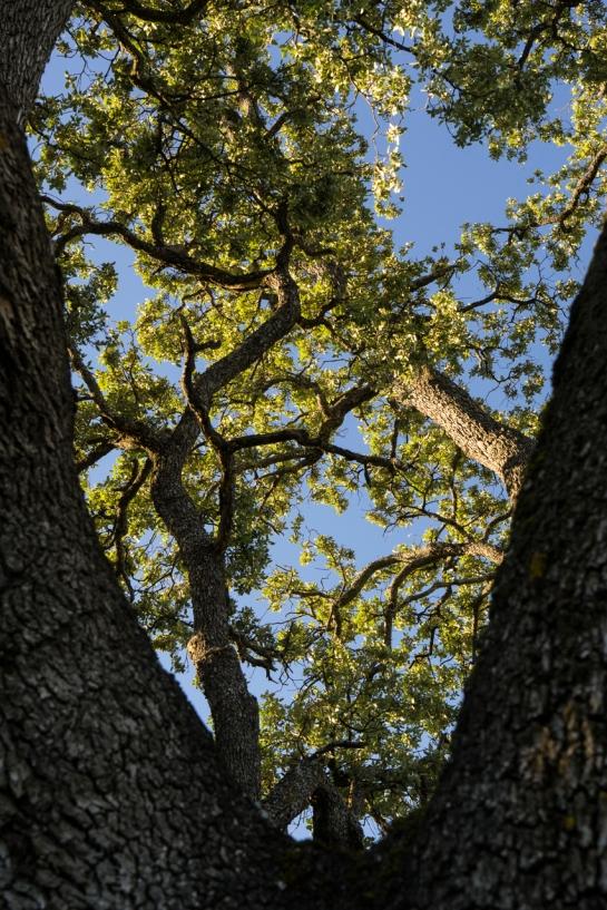 'Big Tree' 2016 prt14