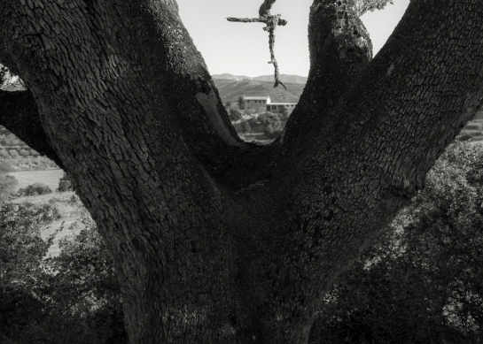 'Big Tree' 2016 prt22