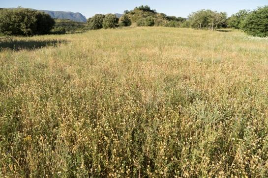 A short Stroll through the Fields prt1