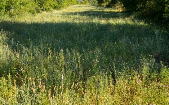 A short Stroll through the Fields prt5