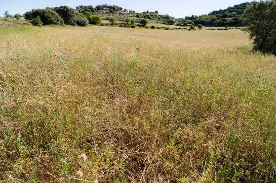 A short Stroll through the Fields prt7