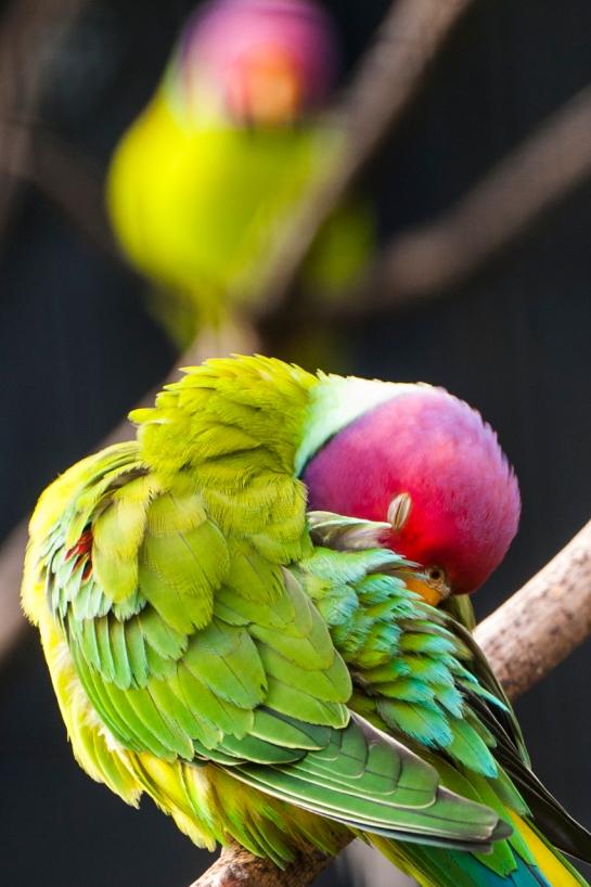 I like . . Birds