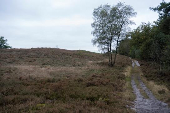 The quiet Hillside