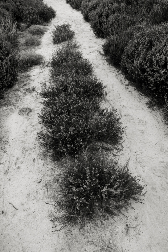 The Path that Day, a little later