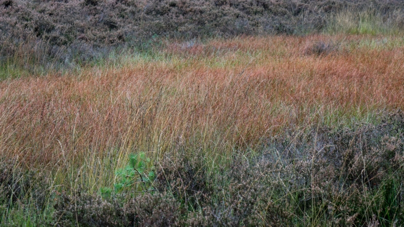 The Colors of the Grass prt2