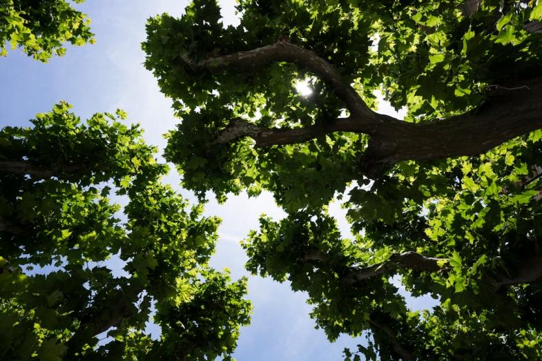 Endless shades of Green