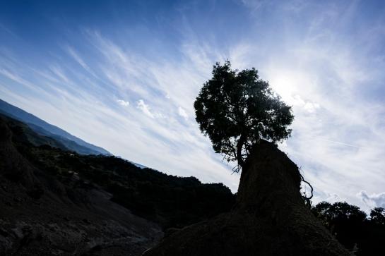 Meeting Little Tree prt1