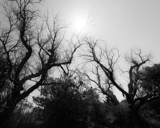 Leafless in the Sun