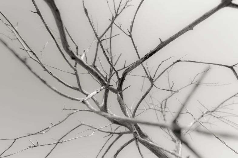 Branches in Space