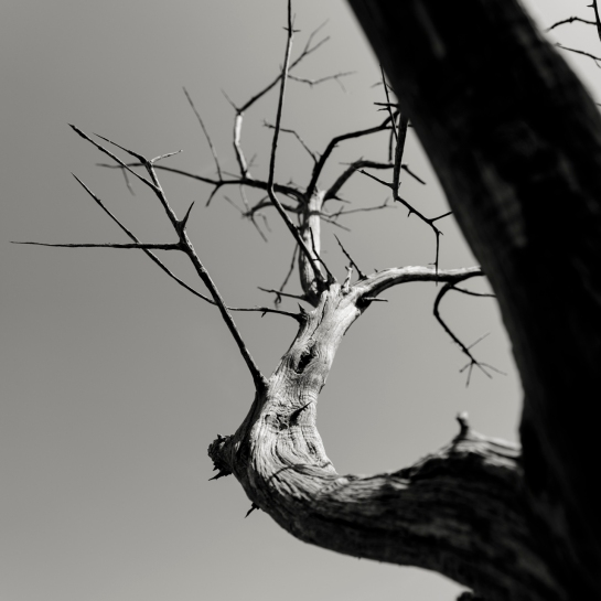 Branches in Space prt2