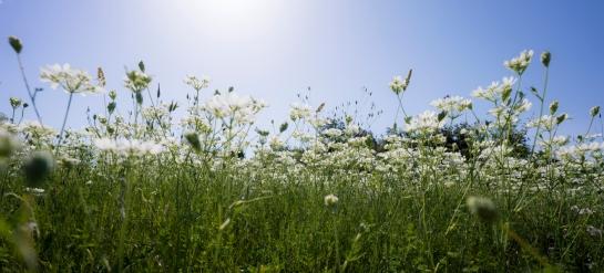 White Flowers prt2