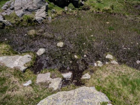 Wetland and Stones