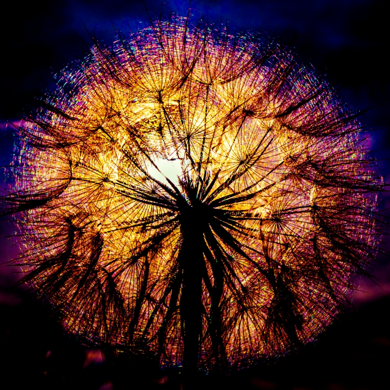 'Fireworks 2017'