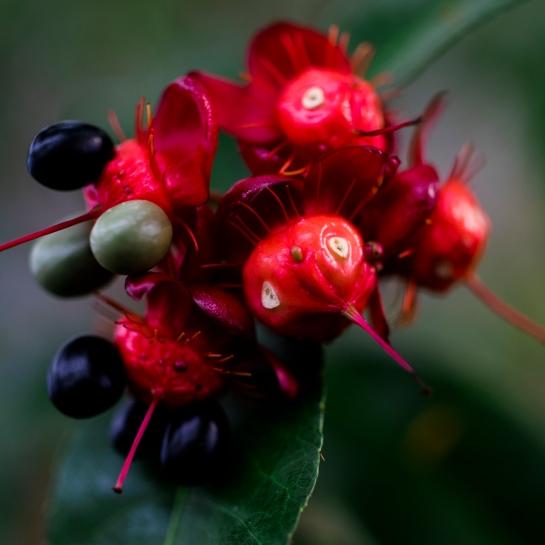 'Strange Fruit'