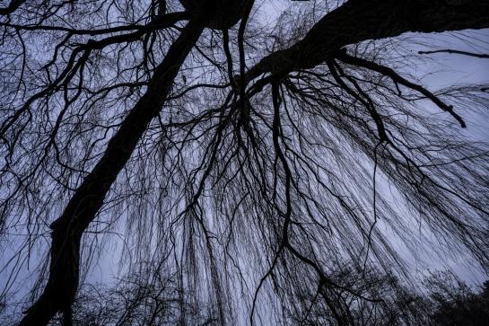Weeping Willow prt2