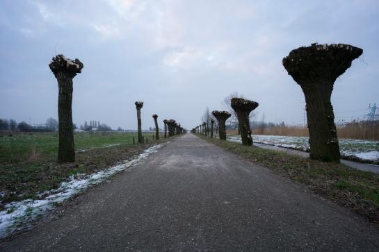 Emptyheaded Road